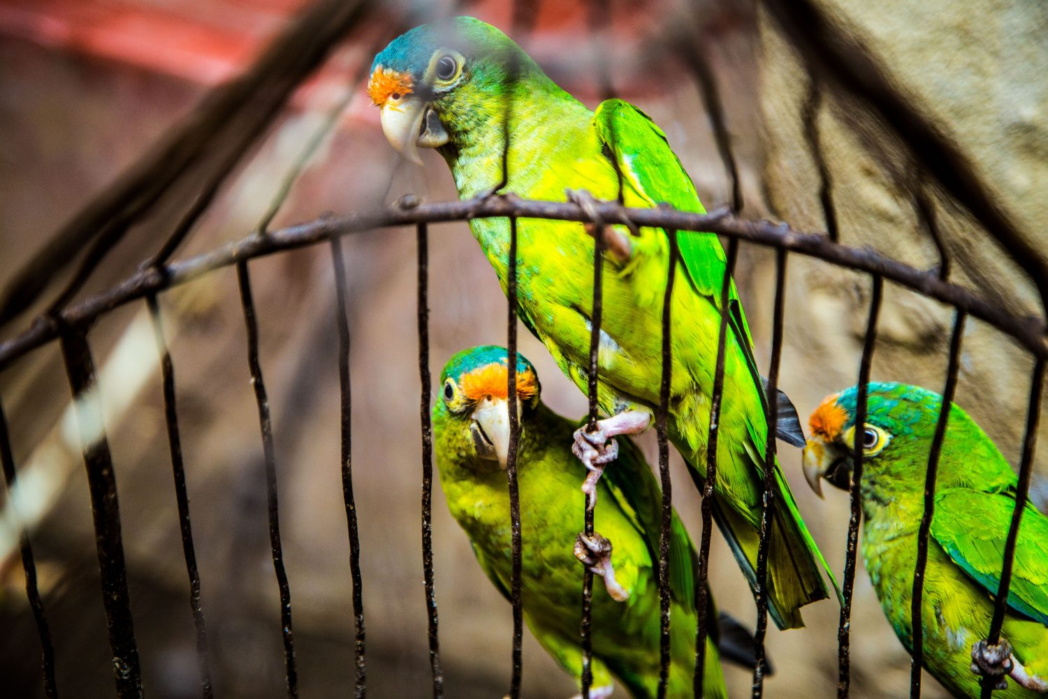 best bird cage for lovebirds