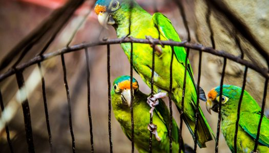 The 5 Best Bird Cages For Lovebirds