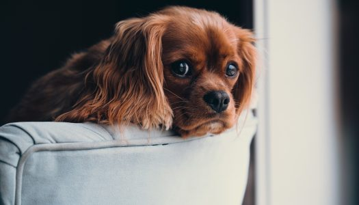 The 5 Best Dog Beds For Cocker Spaniels