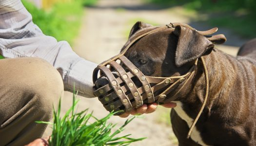 The 5 Best Dog Muzzles For Biting
