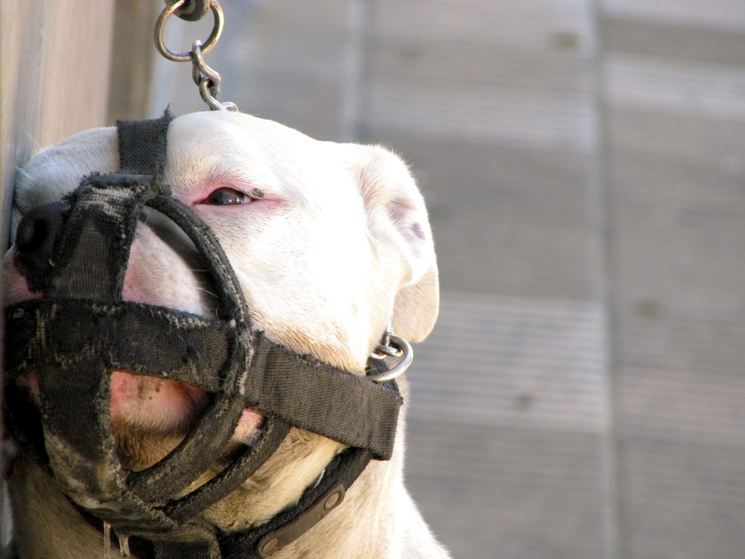 best dog muzzle for biting