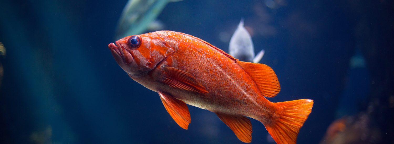 best salt water aquarium kits