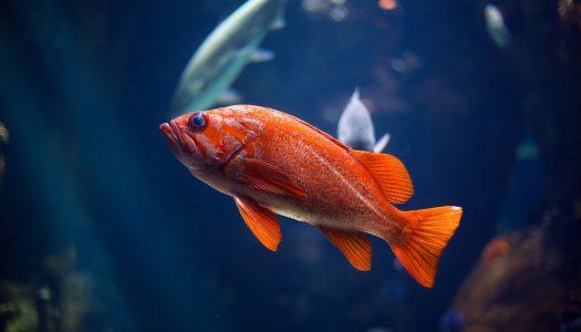 The 5 Best Saltwater Aquarium Starter Kits