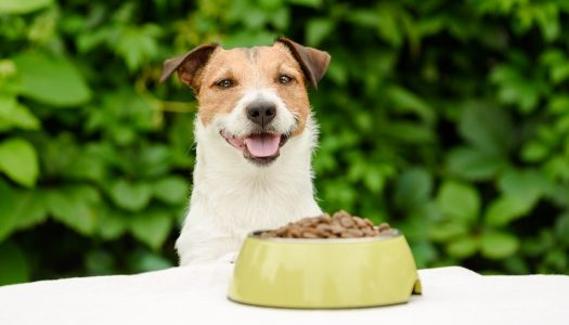 The 5 Best Dog Foods For Skin Allergies