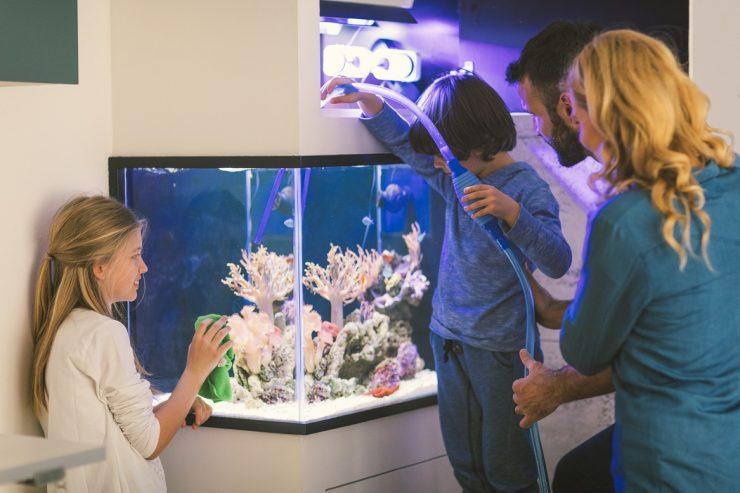 best saltwater aquarium starter kit