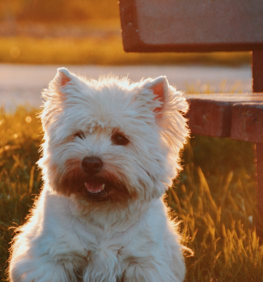 Cover Image: Best Dog Foods For Maltese Tear Stains