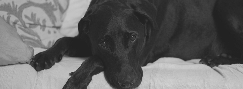5 best weight management dog food for large breeds