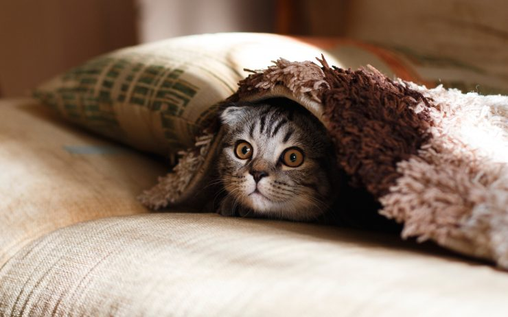Cover Image: best cat toys to keep them busy