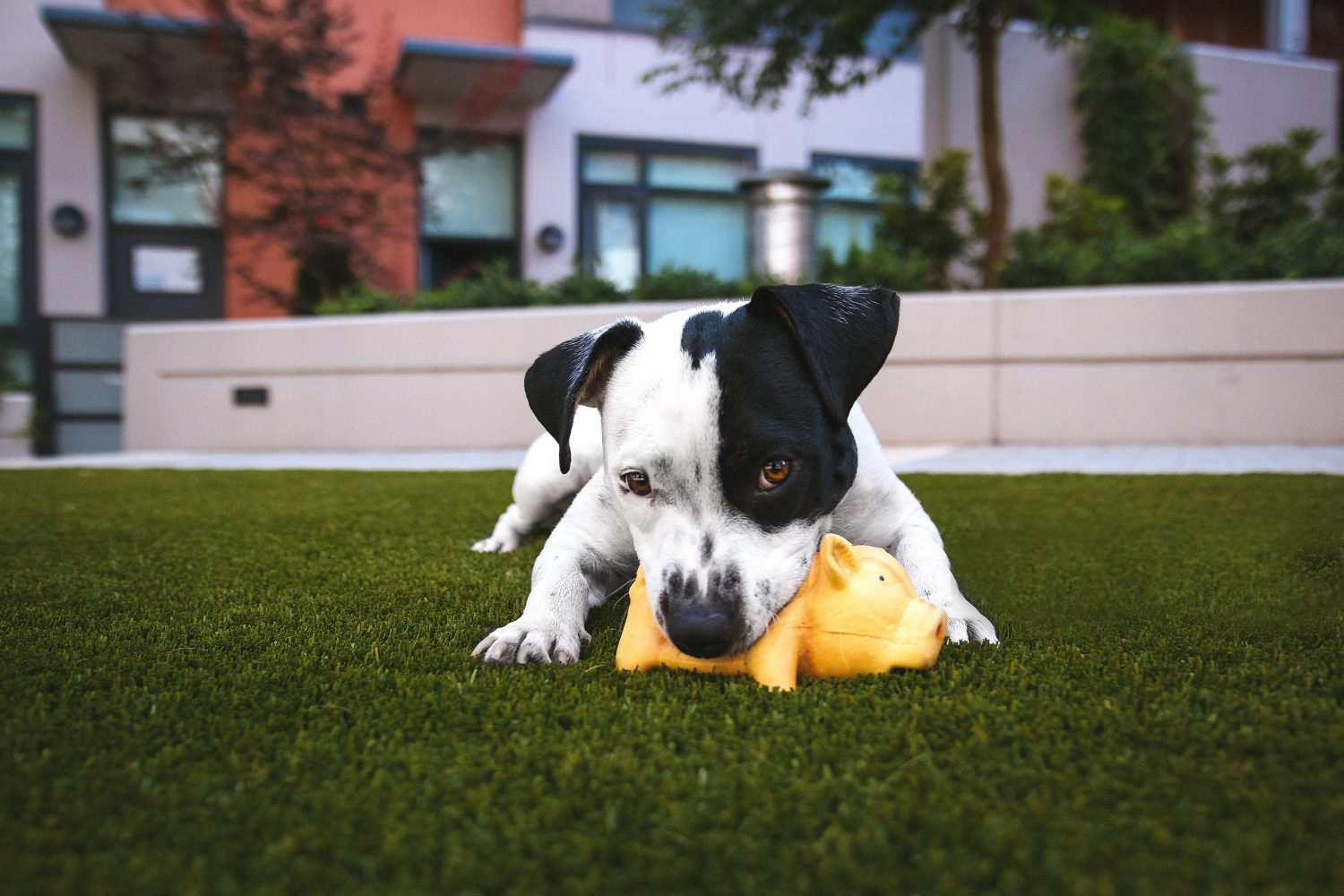 Cover Image: best dog chew toys for aggressive chewers