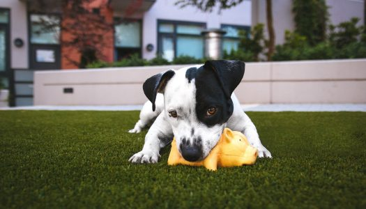 The 5 Best Dog Chew Toys For Aggressive Chewers