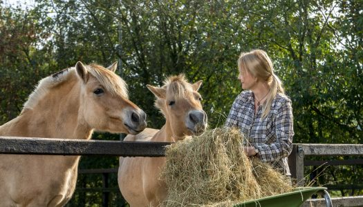The 5 Best Horse Feeds On The Market