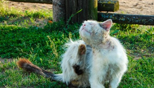 The 5 Best Flea Medicines For Cats