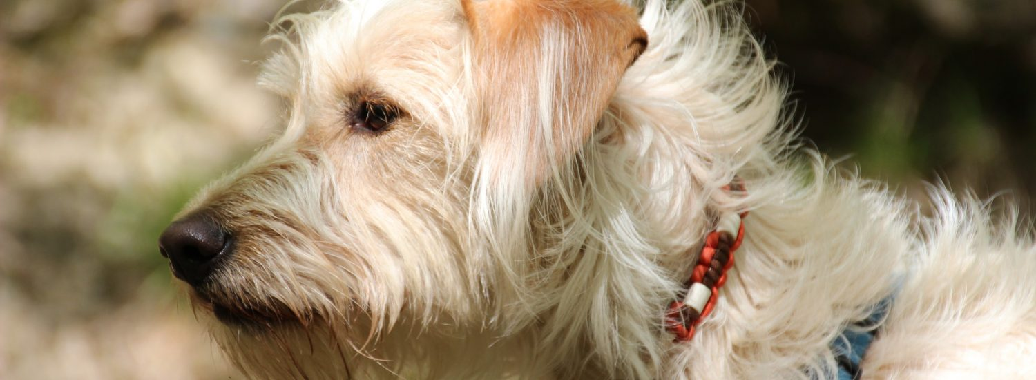 Best Flea Tick and Mosquito Prevention for Dogs