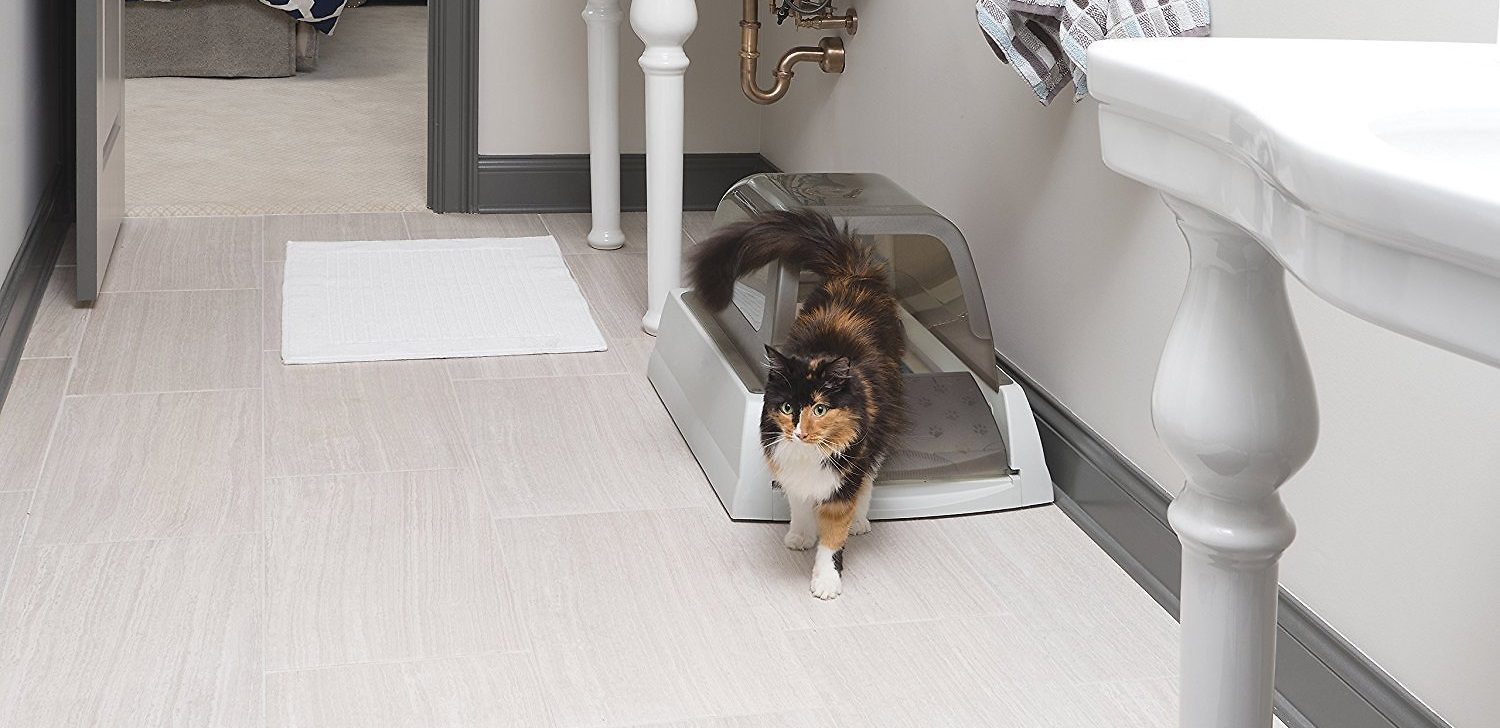Cover Image: Best self-cleaning litter box for multiple cats
