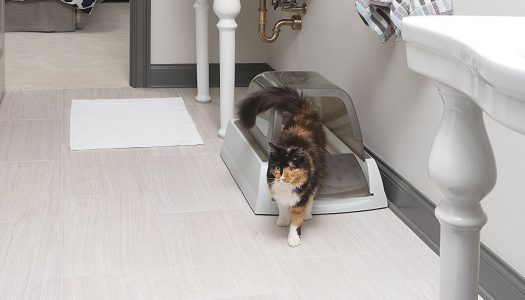 The 5 Best Self-Cleaning Litter Boxes For Multiple Cats