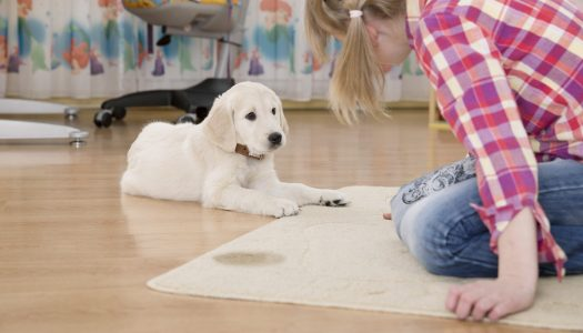 The 5 Best Carpet Cleaner Solutions For Pet Urine