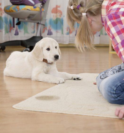 best carpet cleaner solution for pet urine