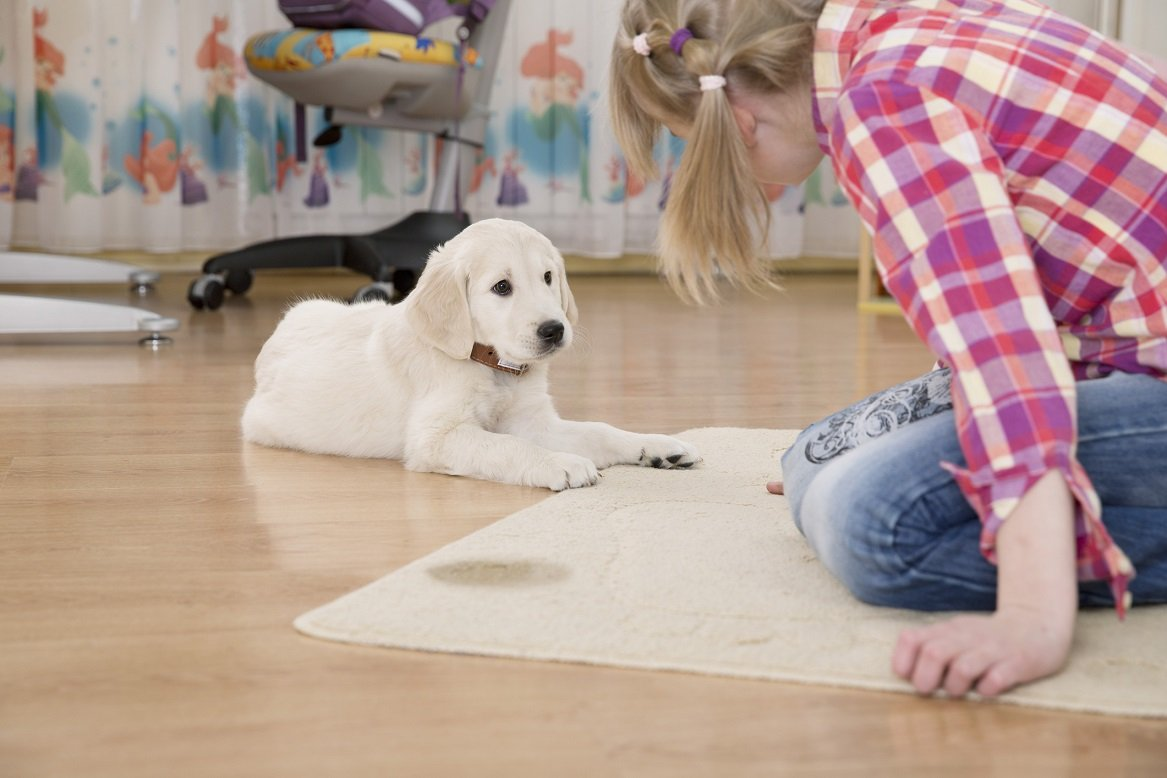 best carpet cleaner solution for pet urine