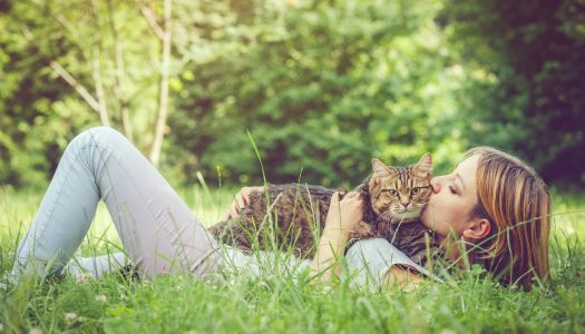 The 5 Best Deworming Medicines For Cats