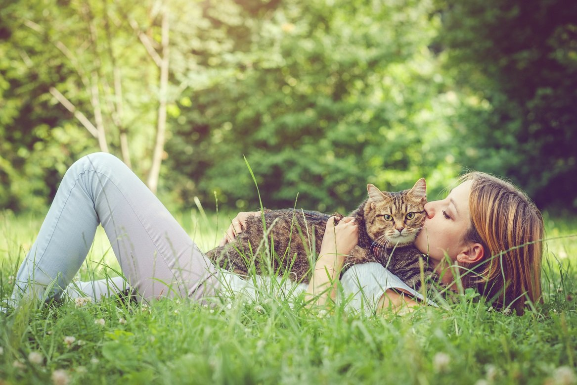 Cover Image: best deworming medicine for cats