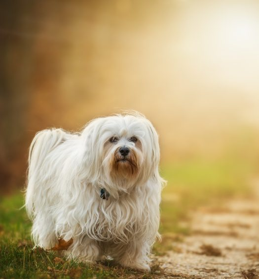 Cover Image: best dog brush for long haired dogs
