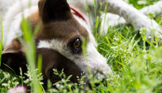 The 5 Best Ear Mite Medicines For Dogs
