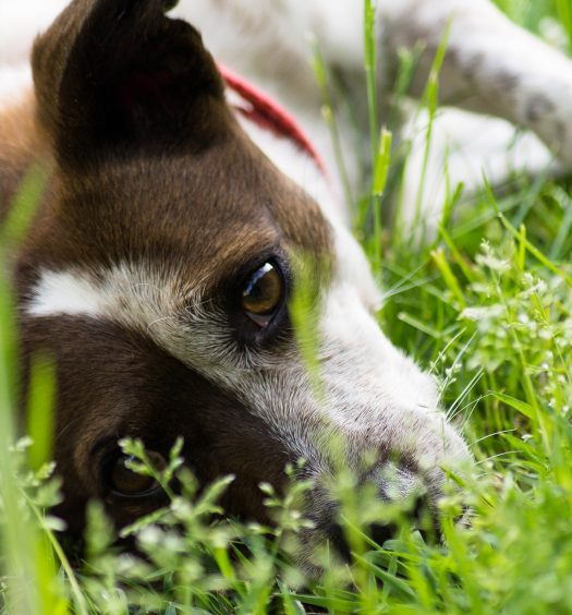 best ear mite medicine for dogs