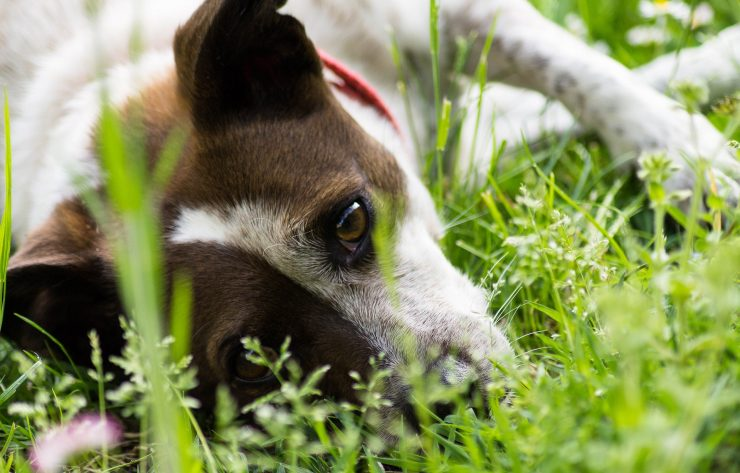 Cover Image: best ear mite medicine for dogs