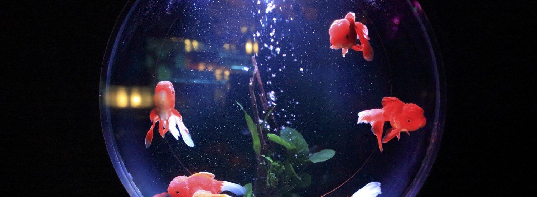 fish tank faq's