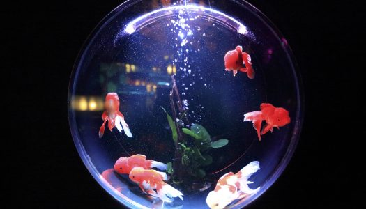 Everything You Need To Know About Fish Tanks