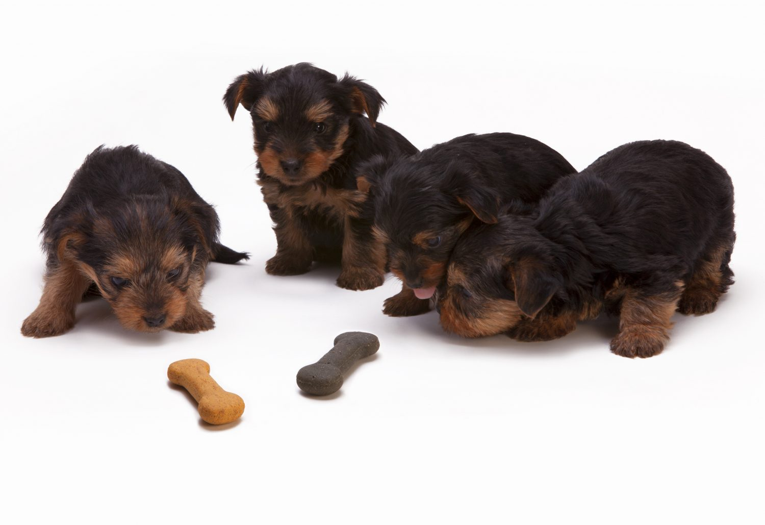 Cover Image: Best bones for teething puppies