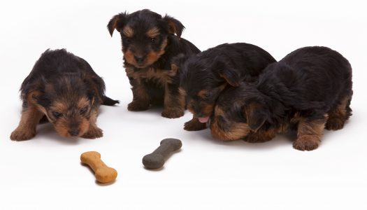 Top 5 Best Bones For Teething Puppies