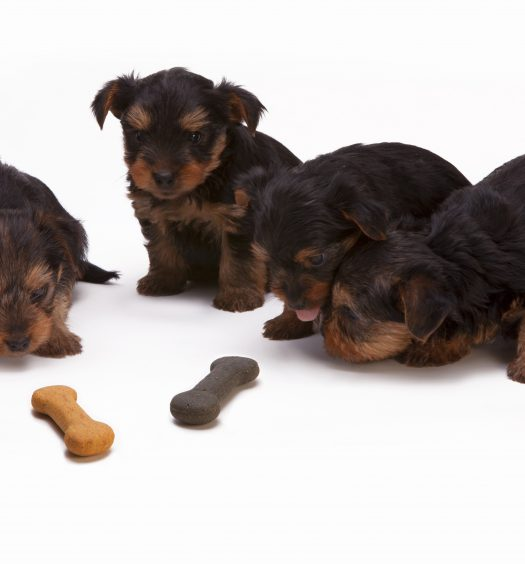 Best bones for teething puppies
