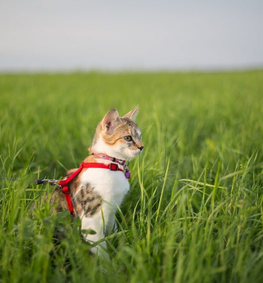 best cat harness no escape