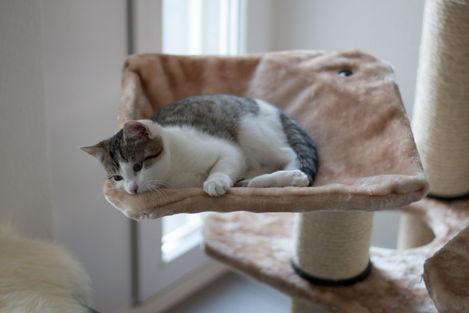 Cover Image: best cat tree for multiple cats