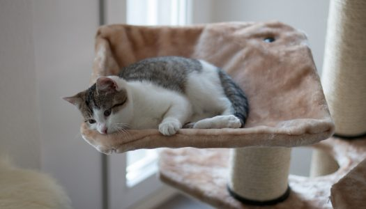 Top 5 Best Cat Trees For Multiple Cats