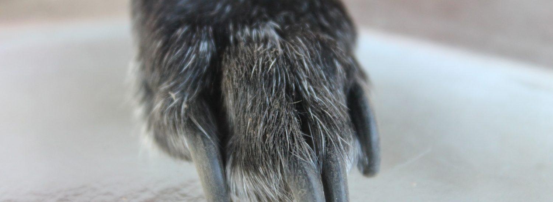 best dremel grinder for dog nails