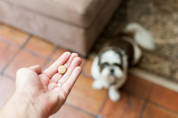 Cover Image: Best Cranberry Supplement For Dogs