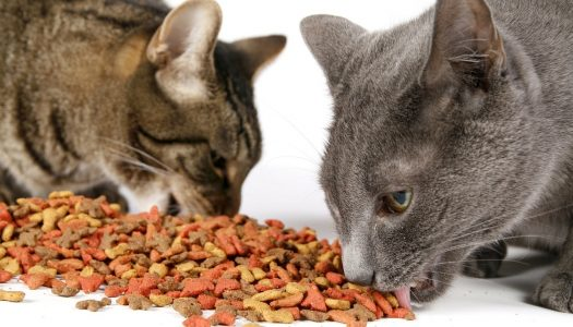 Top 5 Best Dry Cat Foods For Older Cats