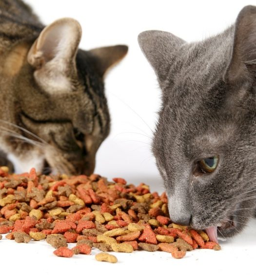 Best Dry Cat Food For Older Cats