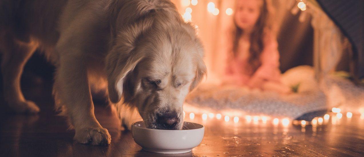 best dog dental water additive