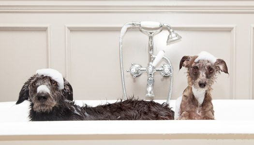 Top 5 Best Dog Shampoo For Dander