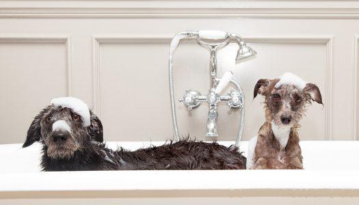 Top 5 Best Dog Shampoo For Dander