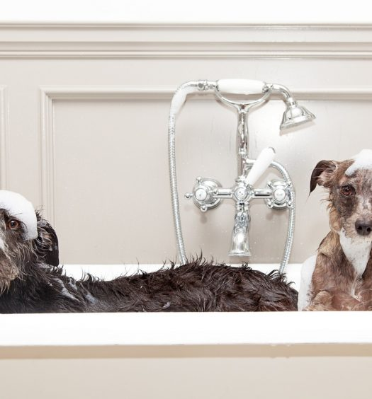 Cover Image: best dog shampoo for dander