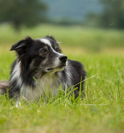 best fly repellent for dogs