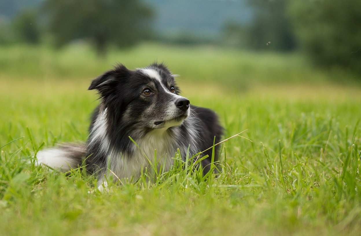 Cover Image: best fly repellent for dogs