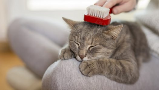 Top 5 Best Brush For Medium Hair Cat