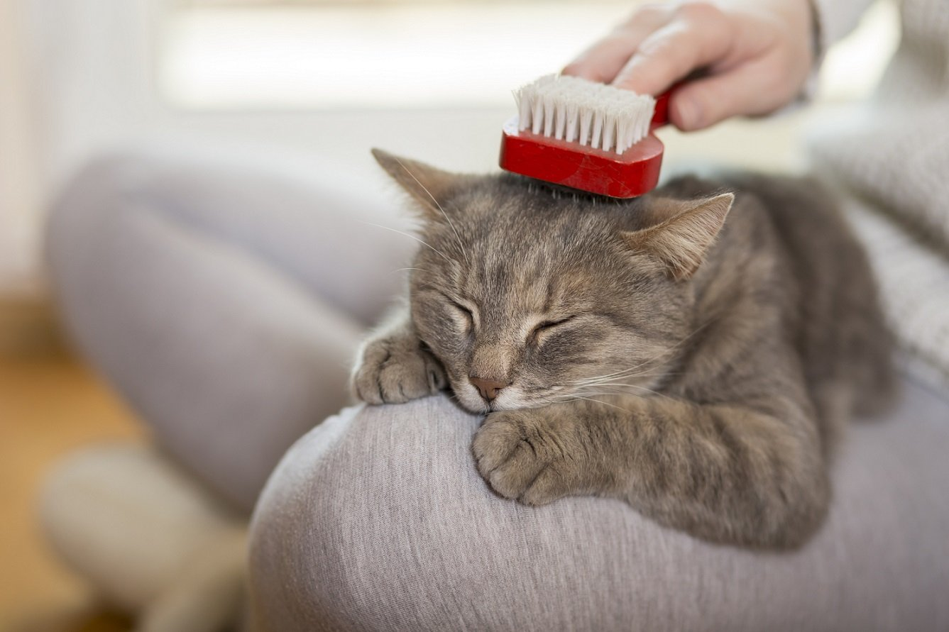 Cover Image: Best Brush For Medium Hair Cat