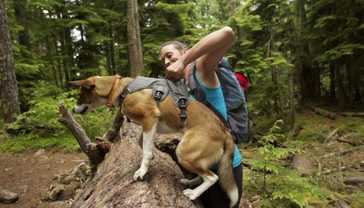 Best Hiking Pack For Dogs