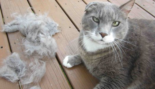 5 Best Cat Foods for Hairballs and Vomiting